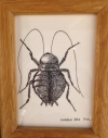 India Ink Cockroach