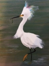Edith the Egret