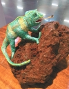 Madagascar Lizard on Lava Rock at Dinner